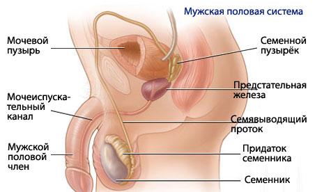 как увеличить пенис самостоятельно Советск